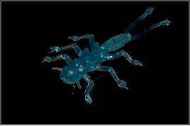 Приманка силиконовая 10105 Microkiller Веснянка (синий флюо) 35мм (8шт)